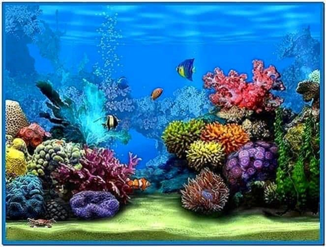 Live marine aquarium screensaver