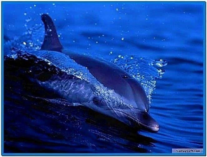 Living Dolphins 3D Screensaver 1.0