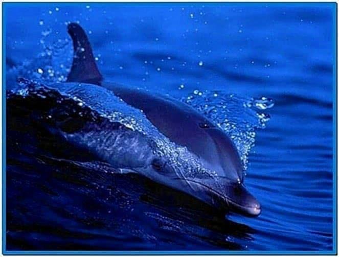 Living Dolphins Screensaver