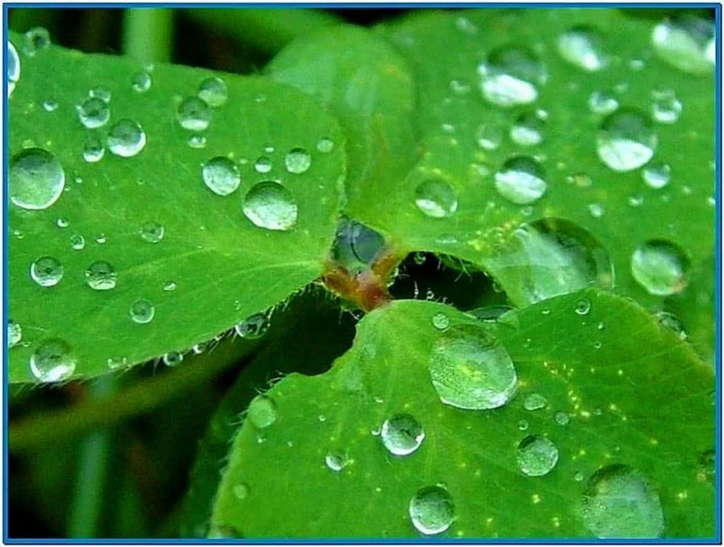 Mac Screensaver Raindrops