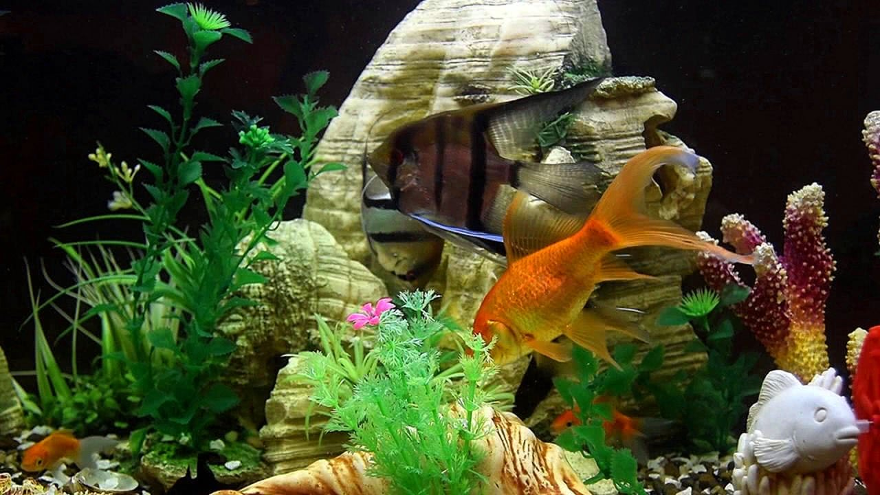 Tropical Fish Aquarium Screensaver Video
