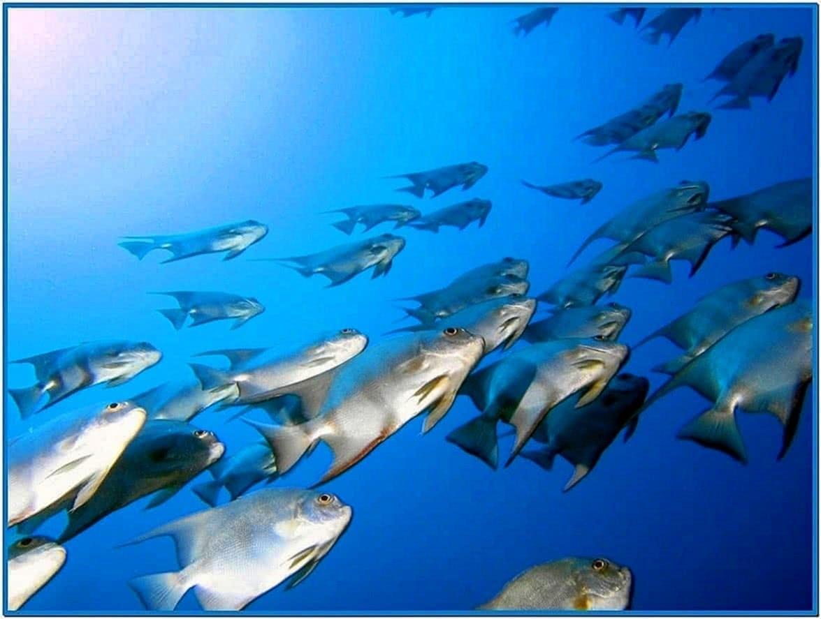 Moving Fish Screensavers Mac