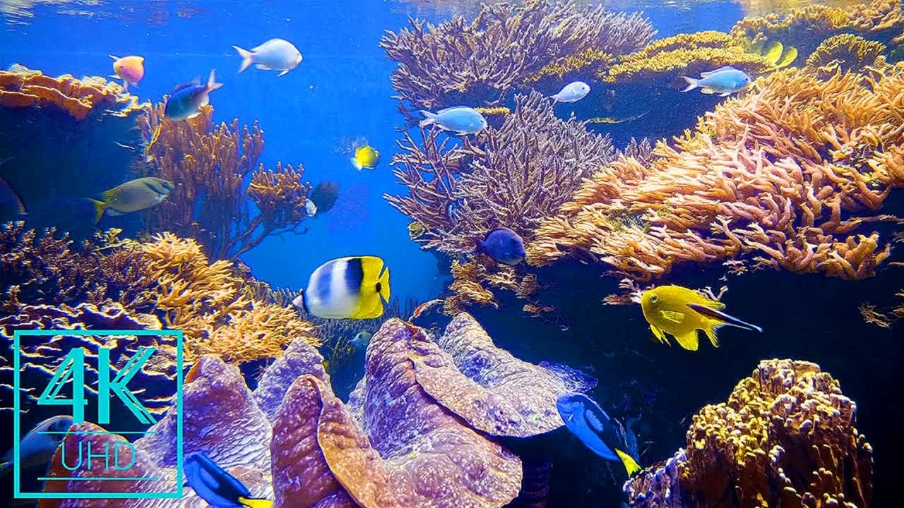4K Aquarium Screensaver with Relaxing Music