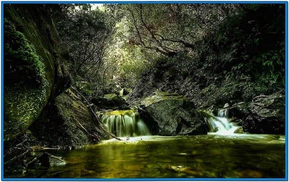 Rainy forest screensaver