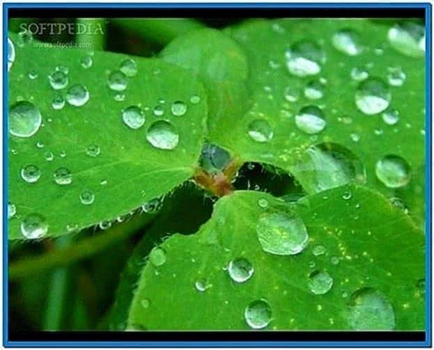 Rainy Screensaver Raindrops
