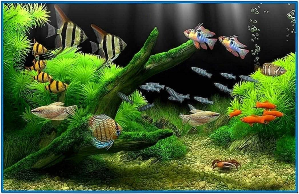 Real Fish Aquarium Screensaver