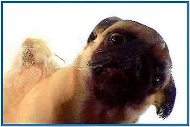 Screensaver Animated Dog