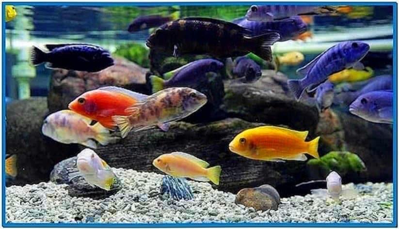 Screensaver Aquarium HD TV