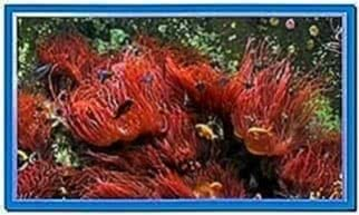 Screensaver Aquarium Real Life 1.0