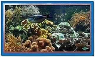 Screensaver Aquarium Real Life