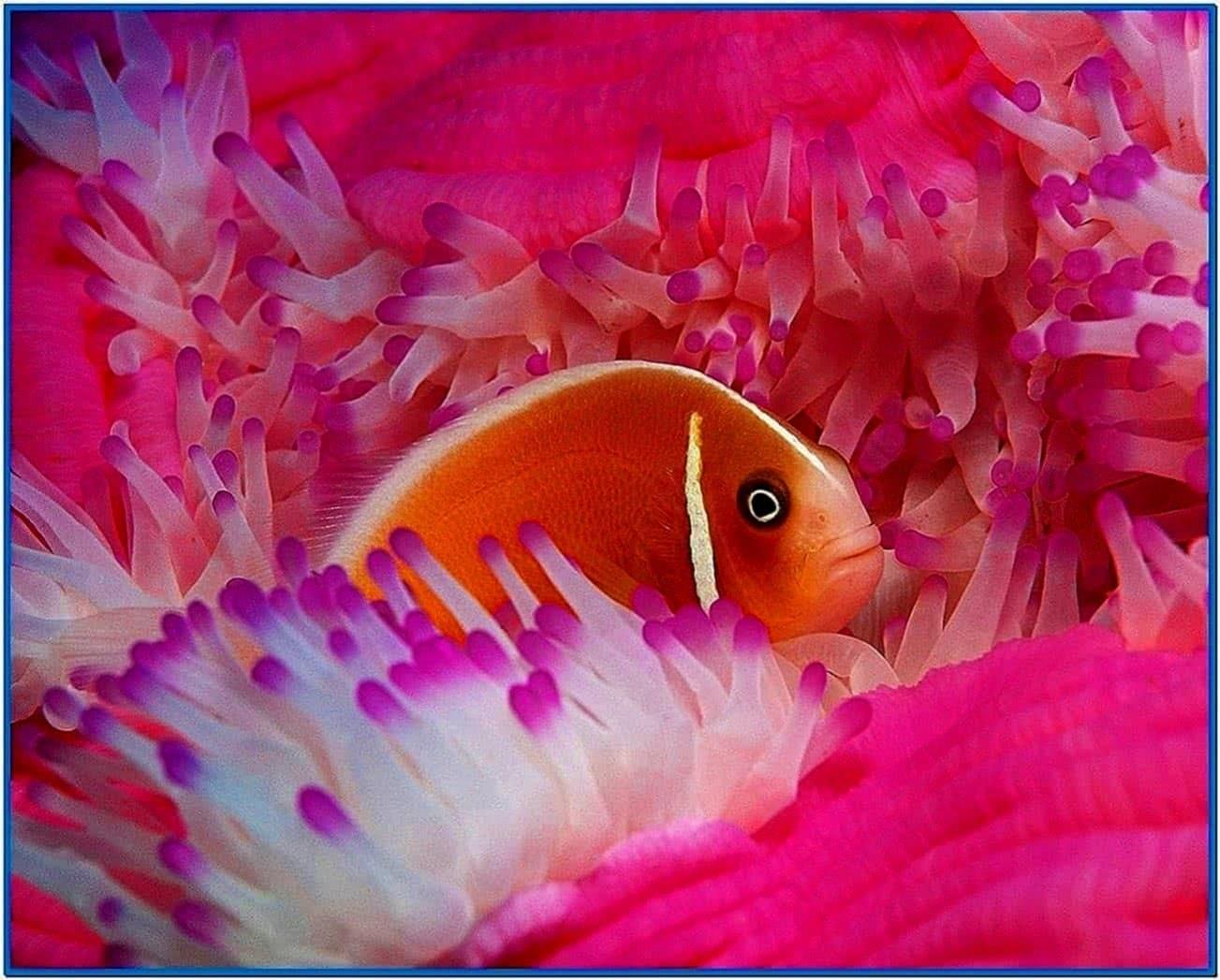 Screensaver Fish 2020