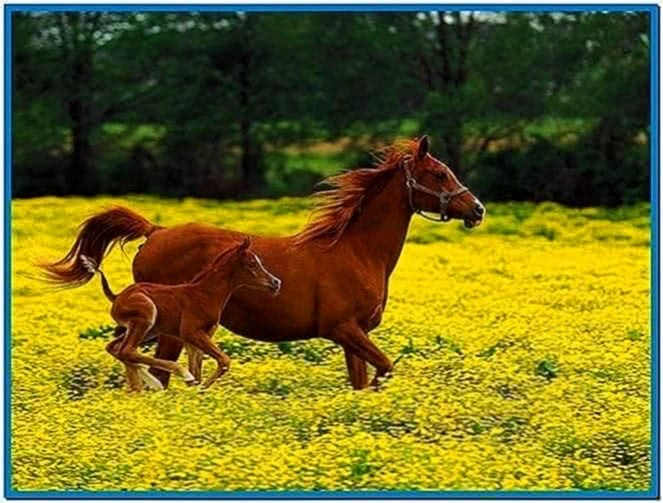 Screensaver Pictures of Horses