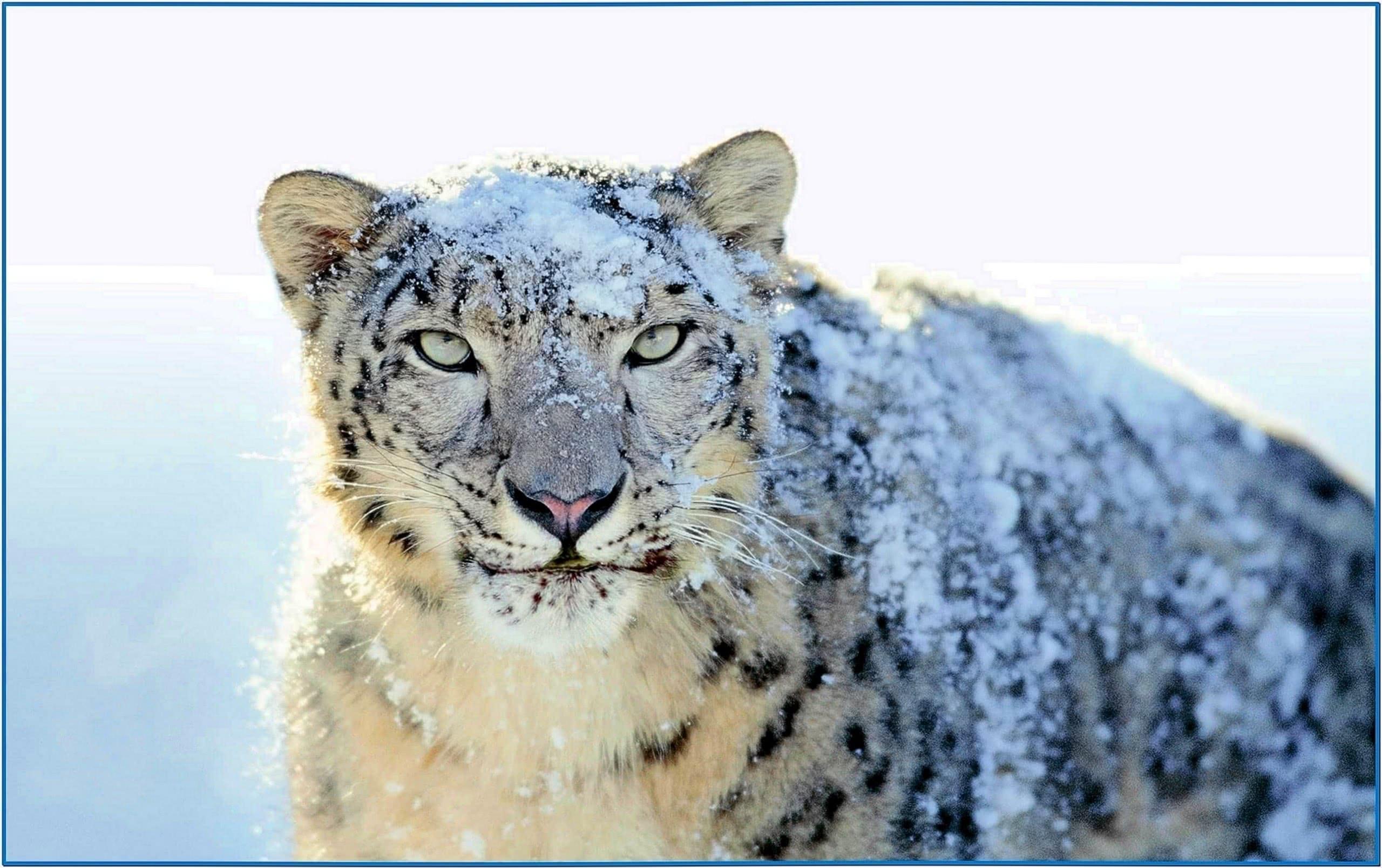Screensaver Snow Leopard