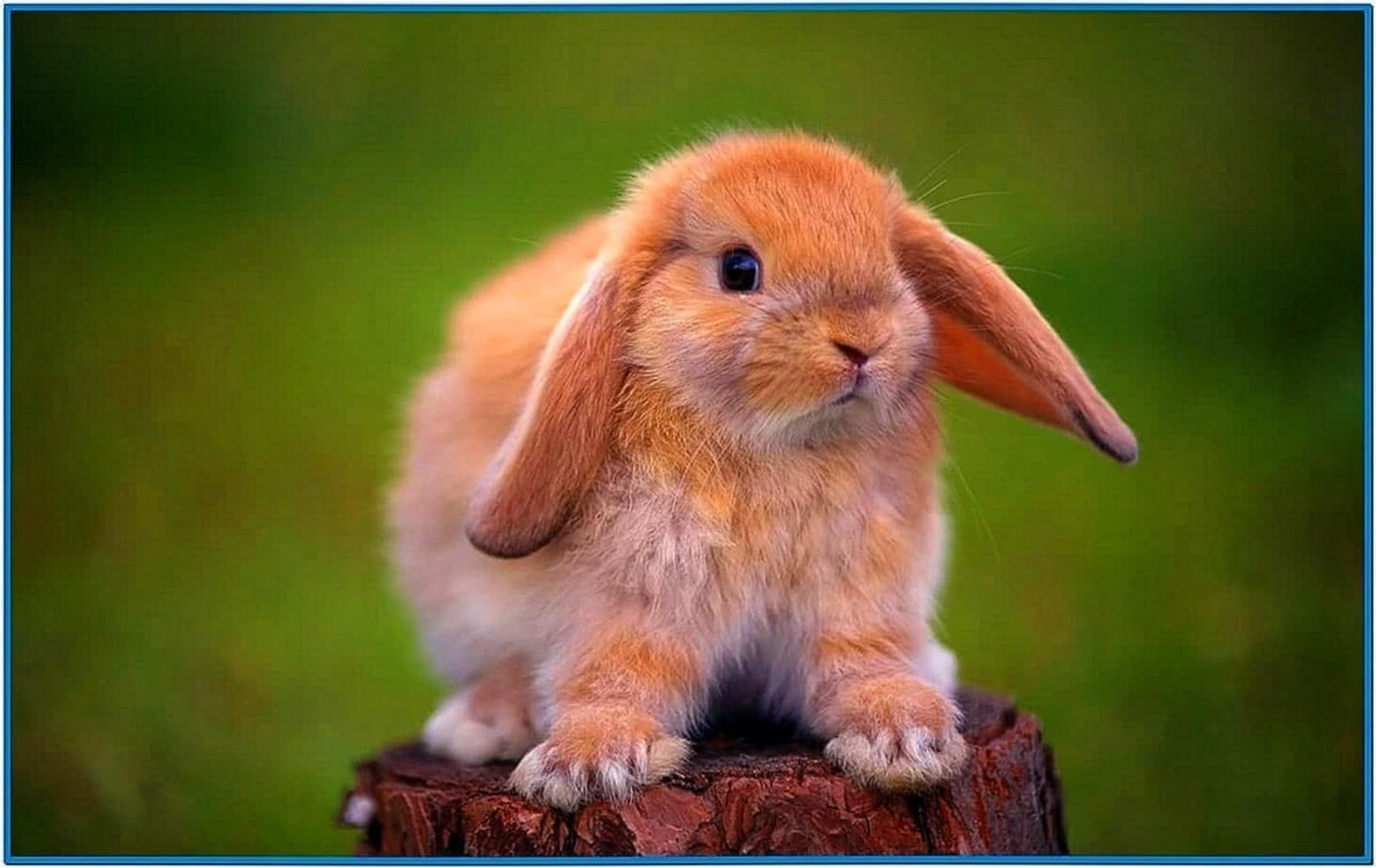 Screensaver Year of The Rabbit