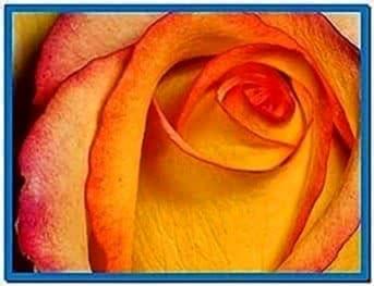 Screensavers Wallpaper of Flowers
