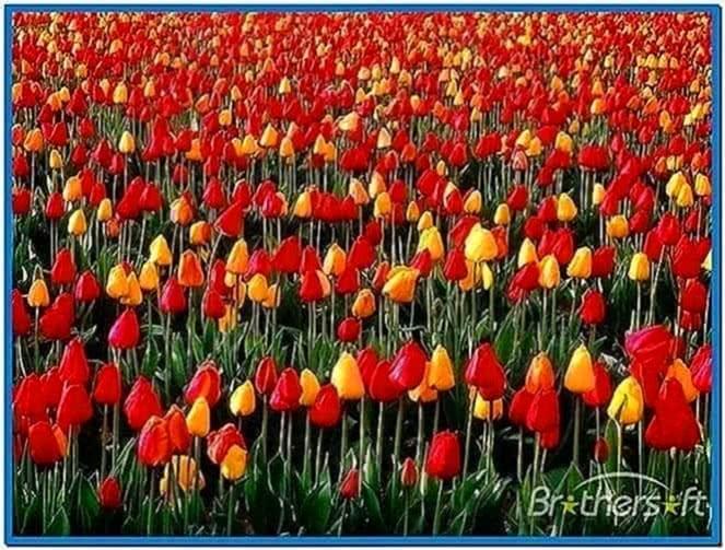Spring bloom screensaver