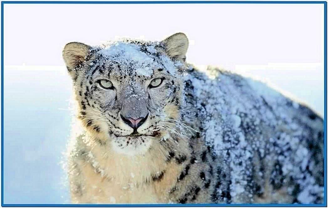 Swf Screensaver Mac Snow Leopard