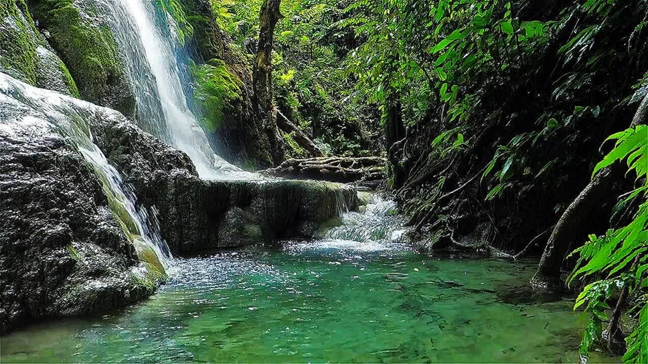Jungle Waterfall in Full HD Screensaver