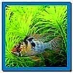 Virtual Fish Tank Screensaver Mac