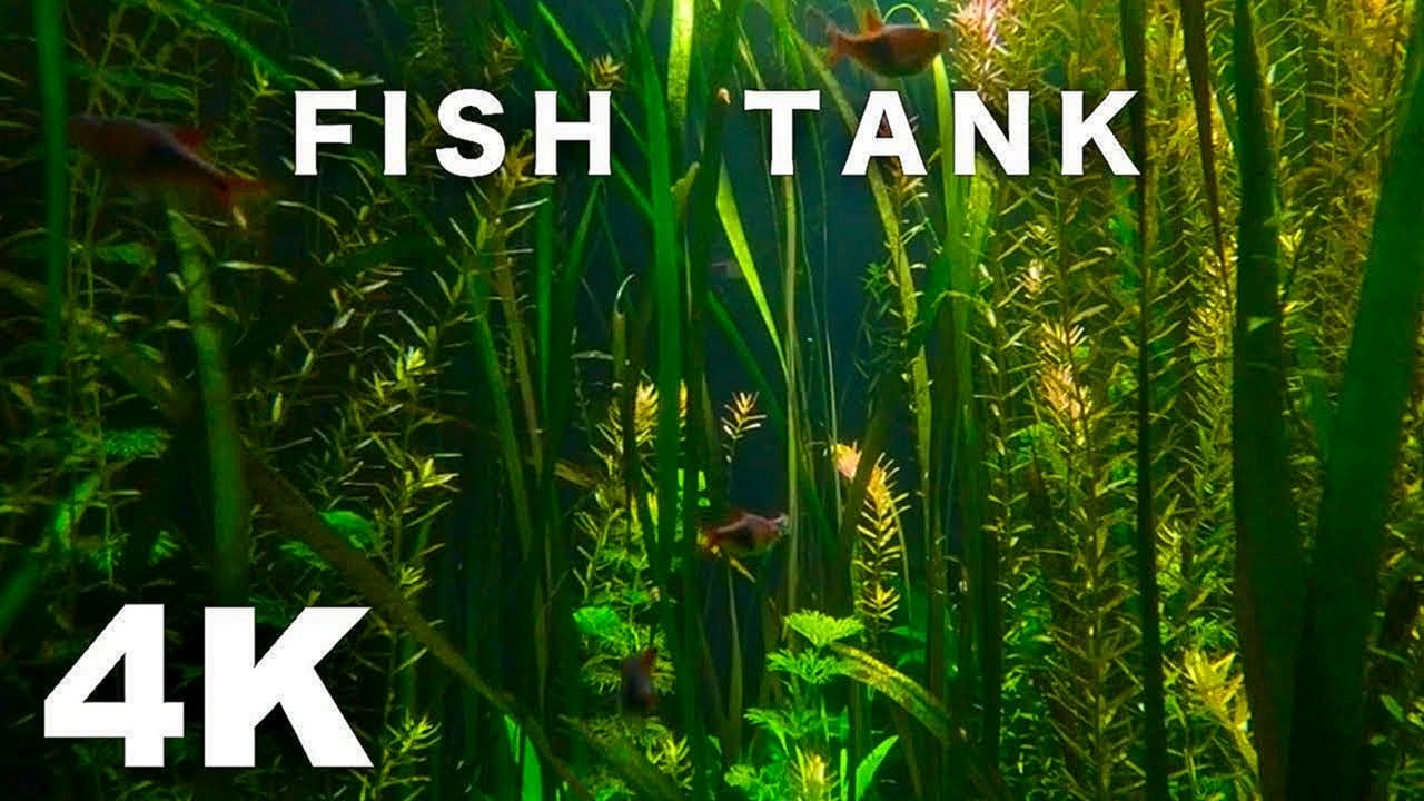 FISH TANK VIDEO 4K AQUARIUM SCREENSAVER