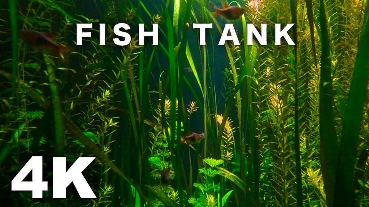 FISH TANK VIDEO 4K AQUARIUM SCREENSAVER