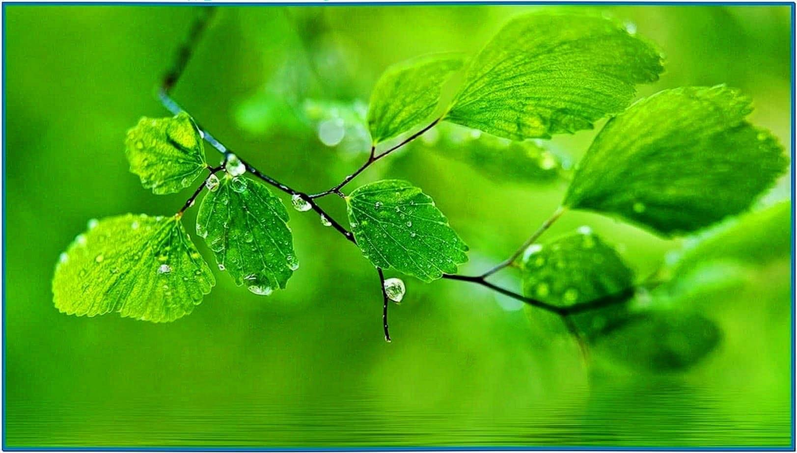Water Drop Screensaver for PC