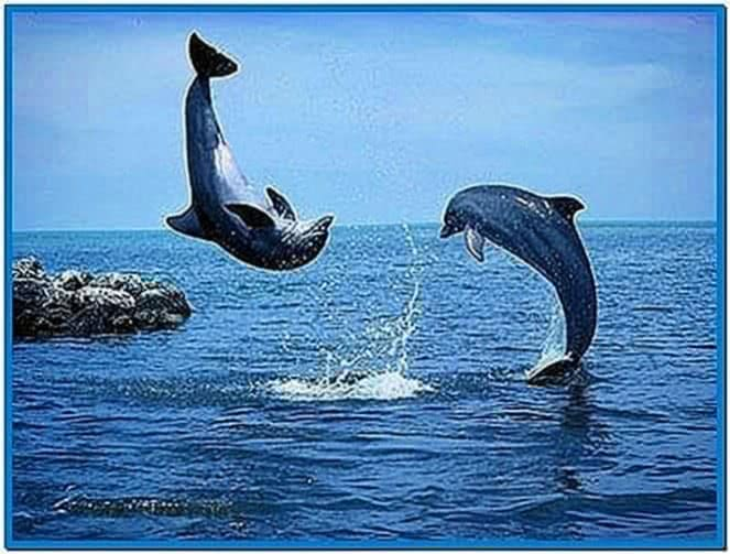 Whales and Dolphins Screensavers