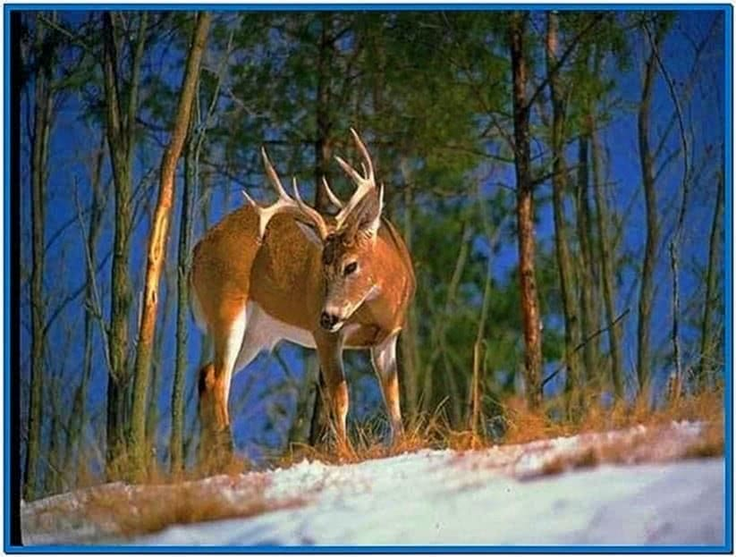 Whitetail deer screensavers
