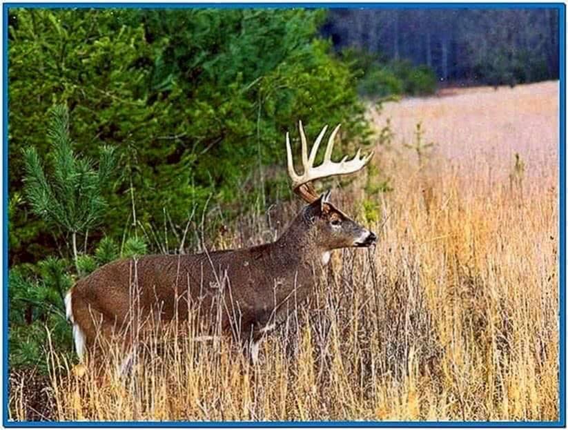 Whitetail deer screensavers download free - Free deer hunting screensavers ...