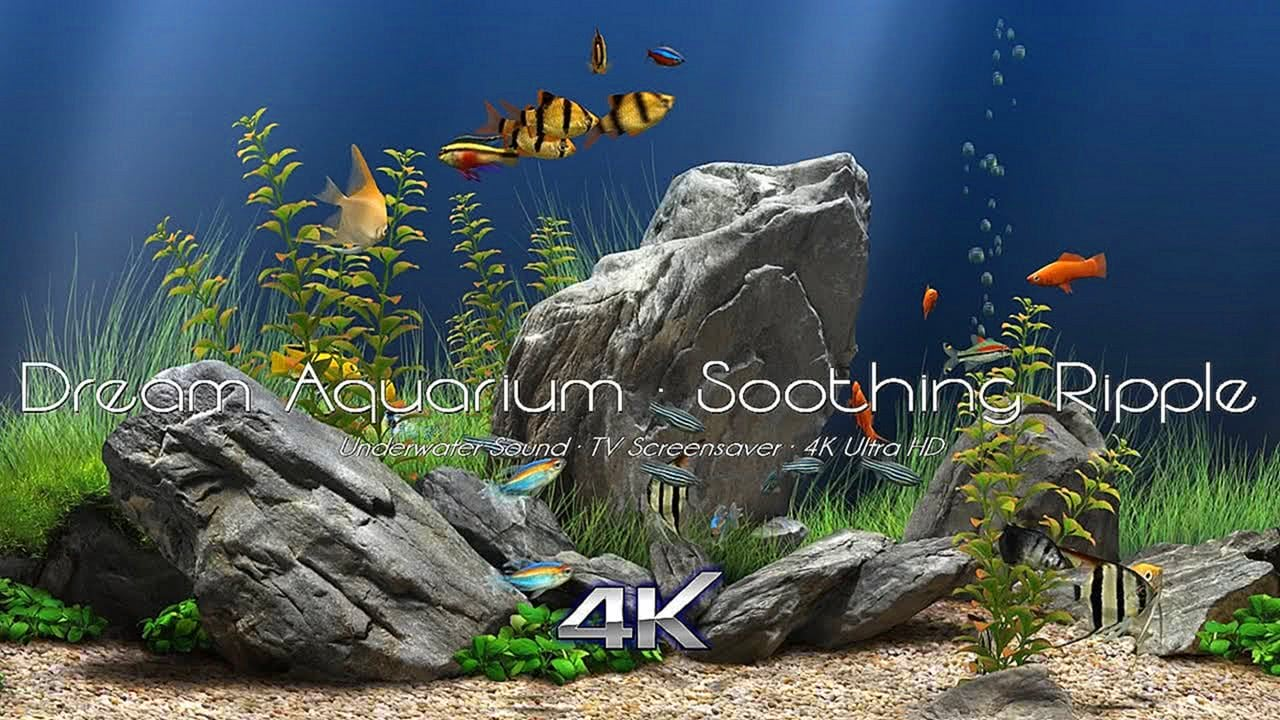 Dream Aquarium TV Screensaver 4K Ultra HD