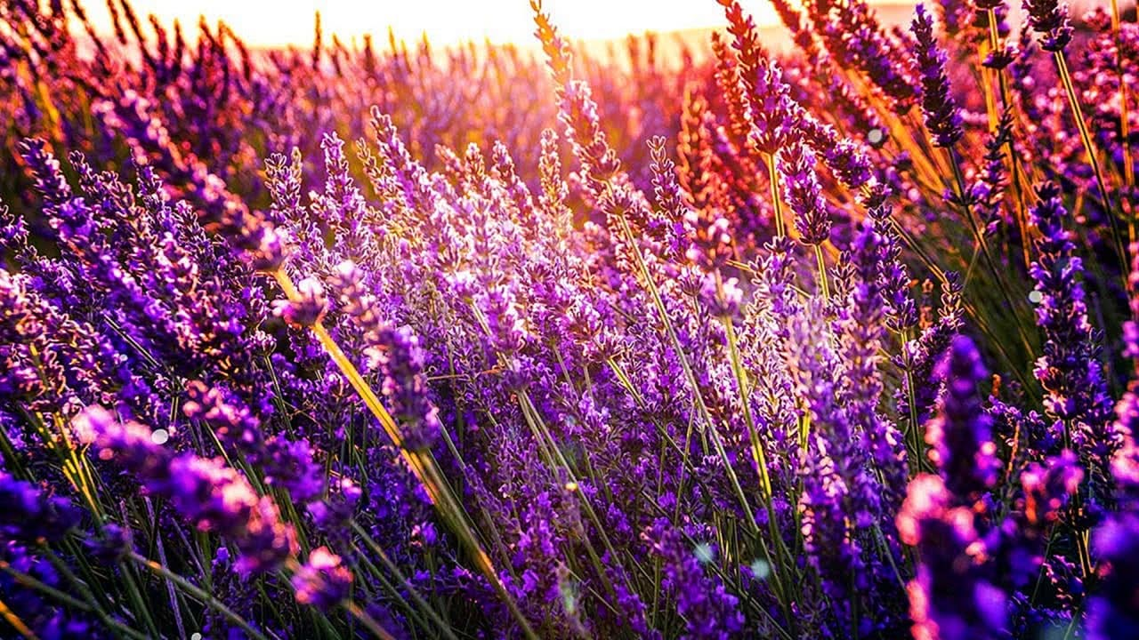 Summer in the Provence with peaceful nature screensaver