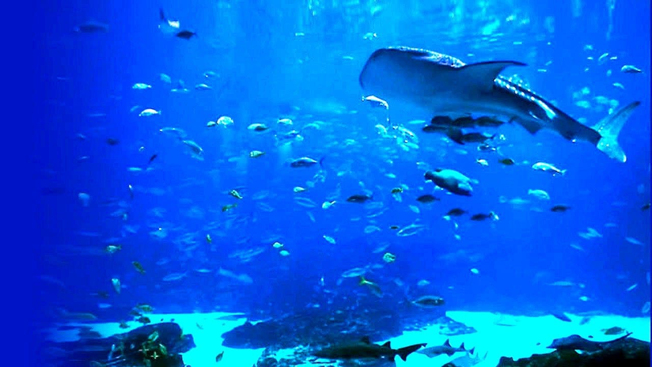 Relaxing Beautiful HD Aquarium Video